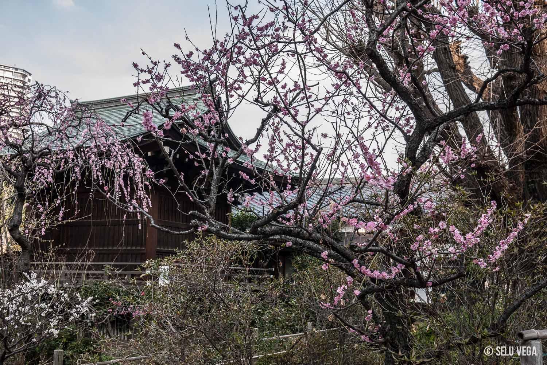 25 postales de amor y 1 reflexión inesperada Parque Ueno (上野公園 Ueno Kōen) en Tokyo